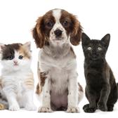 Outubro Rosa: cães e gatos também merecem atenção
