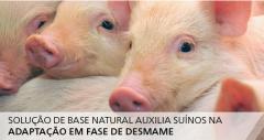Solução de base natural auxilia suínos na adaptação em fase de desmame