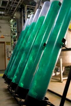 Microalgas promissoras na produção de alimentos