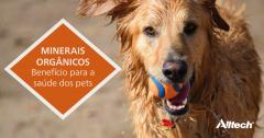 Minerais: seus pets estão recebendo a forma e a quantidade adequada?