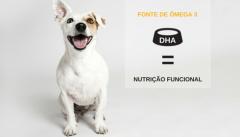 5 benefícios do uso de  Ômega 3 na dieta dos pets