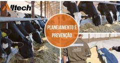 Gado de leite: planejamento e prevenção
