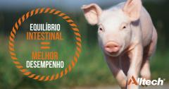 Mais saúde e produtividade: o impacto da microbiota dos suínos