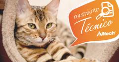 Dieta composta por DHA favorece recuperação pós-operatória em gatos