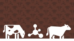 Produção de bovinos com redução de gás metano: missão impossível?