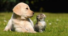 Levedura & algas: Extrato é solução de sucesso para aprimorar a nutrição e a saúde de cães e gatos