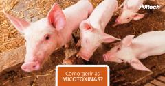 Perigo: micotoxinas podem colocar sua produção em risco