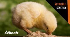 ONE: especialistas discutem inovações para a avicultura