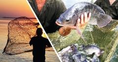 Manejo nutricional e inclusão de aditivos contribuem para eficiência e qualidade dos pescados