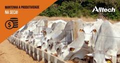 Soluções naturais favorecem produtividade na pecuária durante período de seca