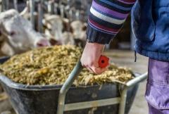 Bovinos: 3 cuidados essenciais para evitar as micotoxinas no inverno