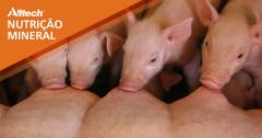 Quer saber como alcançar mais resultados em suínos reduzindo o uso de minerais?