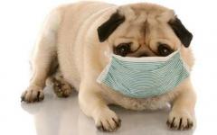 A imunidade começa no pote de ração: Qual a importância dos minerais na alimentação dos pets?